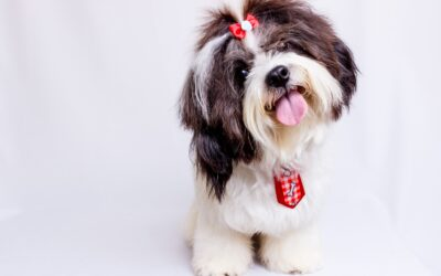 Recently Sold: Jacksonville Pet Groomer
